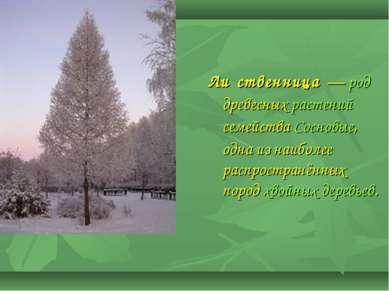Ли ственница — род древесных растений семейства Сосновые, одна из наиболее р...