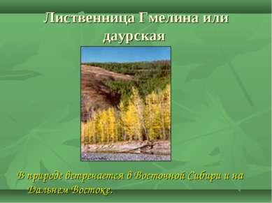 Лиственница Гмелина или даурская В природе встречается в Восточной Сибири и н...