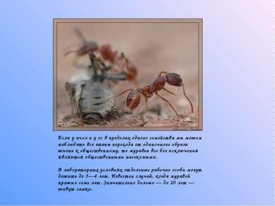 Если у пчел и у ос в пределах одного семейства мы можем наблюдать все этапы...