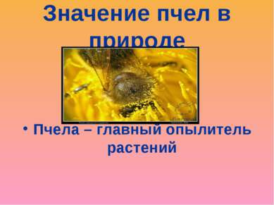 Значение пчел в природе Пчела – главный опылитель растений