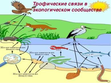 Трофические связи в экологическом сообществе