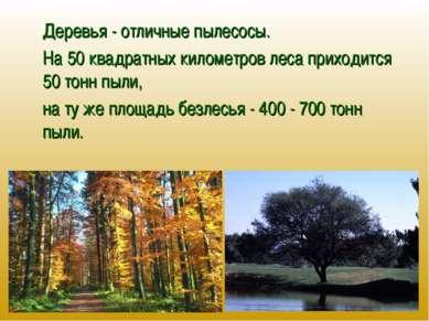 Деревья - отличные пылесосы. На 50 квадратных километров леса приходится 50 т...