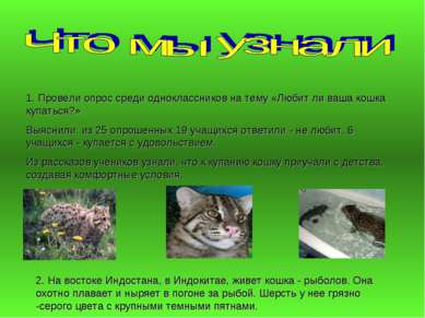 2. На востоке Индостана, в Индокитае, живет кошка - рыболов. Она охотно плава...