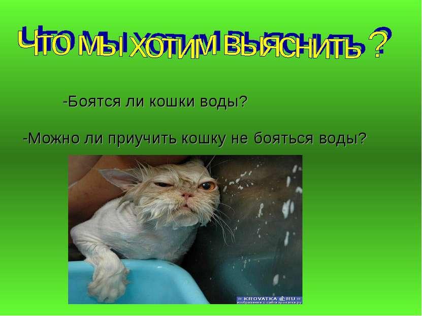 -Боятся ли кошки воды? -Можно ли приучить кошку не бояться воды?