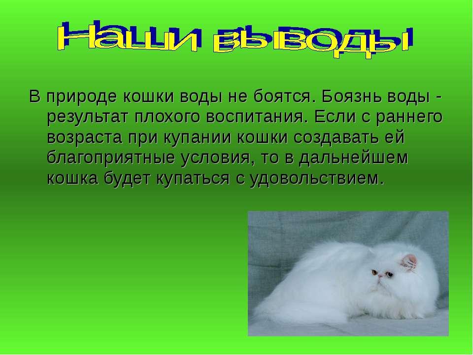 В природе кошки воды не боятся. Боязнь воды - результат плохого воспитания. Е...