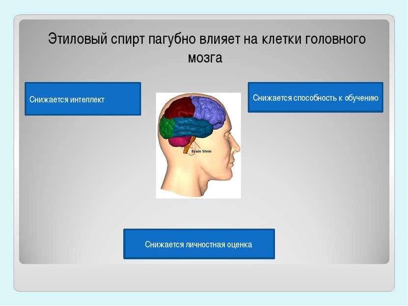 Этиловый спирт пагубно влияет на клетки головного мозга Снижается способность...
