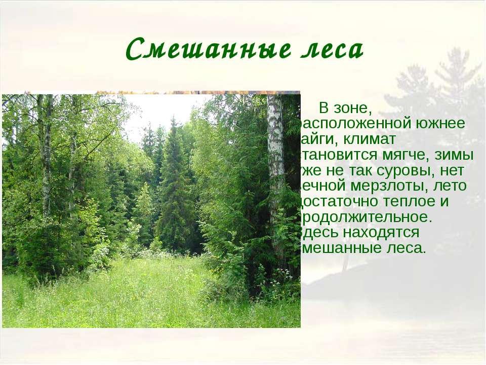 Широколиственные леса Яркими представителями зоны широколиственных пород явля...