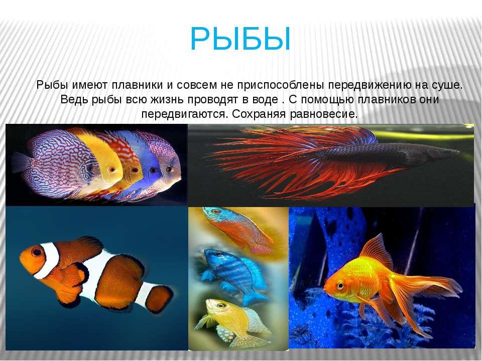 РЫБЫ Рыбы имеют плавники и совсем не приспособлены передвижению на суше. Ведь...