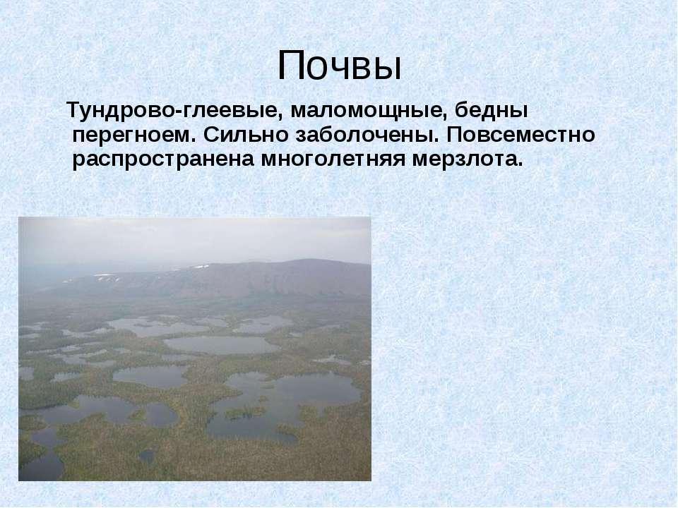 Почвы Тундрово-глеевые, маломощные, бедны перегноем. Сильно заболочены. Повсе...
