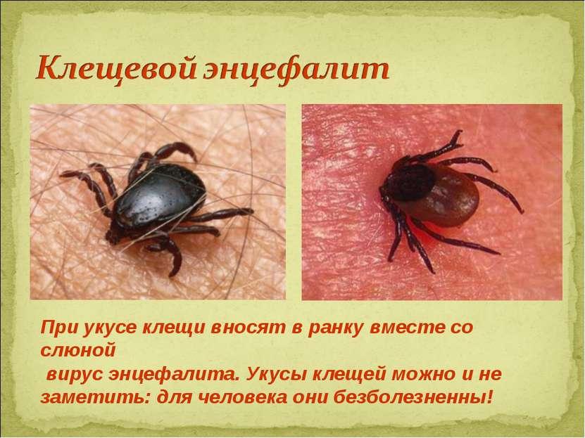 При укусе клещи вносят в ранку вместе со слюной вирус энцефалита. Укусы клеще...
