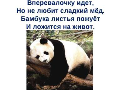 Вперевалочку идет, Но не любит сладкий мёд. Бамбука листья пожуёт И ложится н...