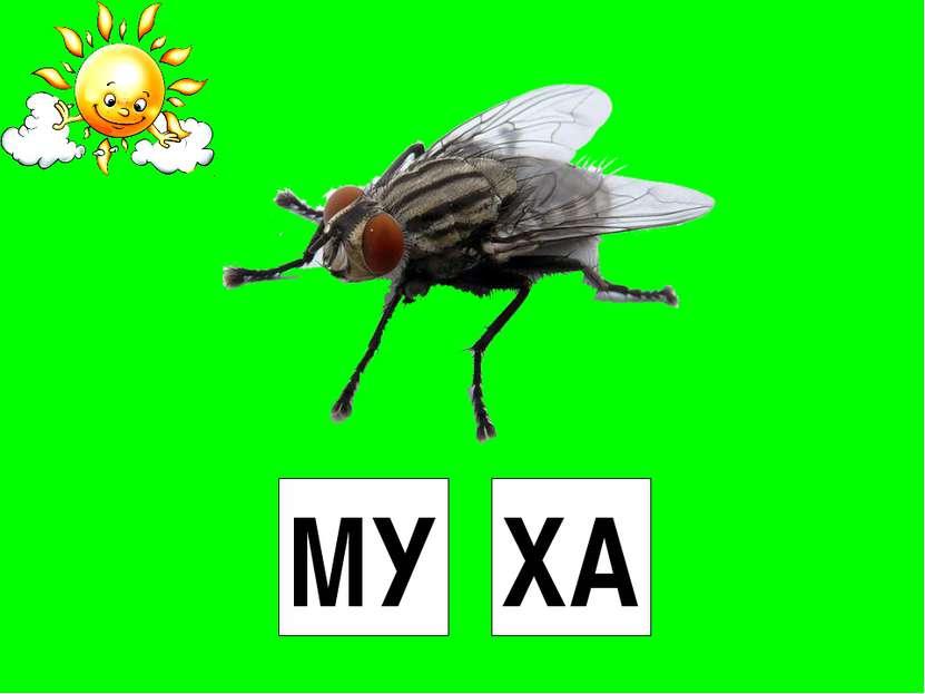 МУ ХА