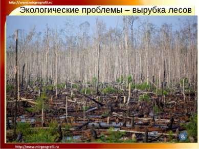 Экологические проблемы – вырубка лесов