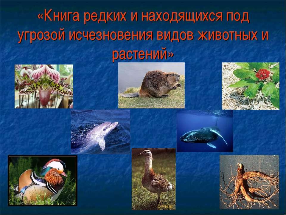 «Книга редких и находящихся под угрозой исчезновения видов животных и растений»