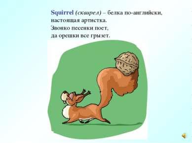 Squirrel (сквирел) – белка по-английски, настоящая артистка. Звонко песенки п...