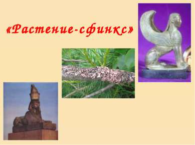 «Растение-сфинкс»
