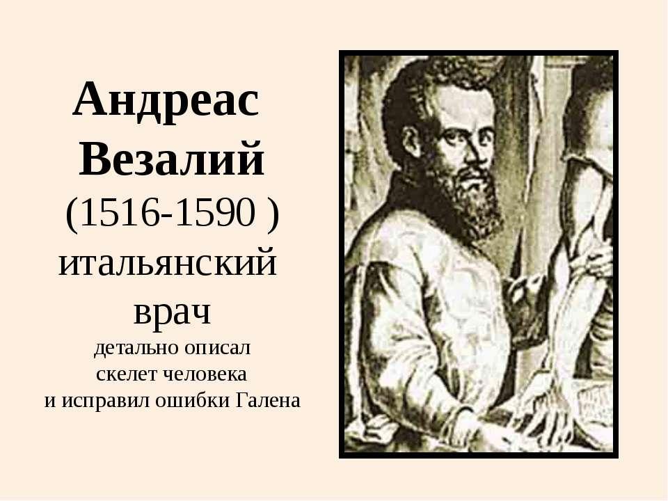 Андреас Везалий (1516-1590 ) итальянский врач детально описал скелет человека...