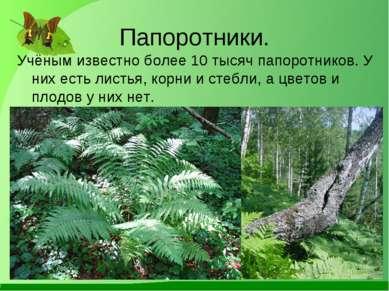 Папоротники. Учёным известно более 10 тысяч папоротников. У них есть листья, ...