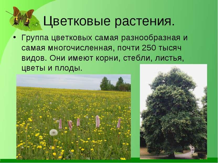 Цветковые растения. Группа цветковых самая разнообразная и самая многочисленн...