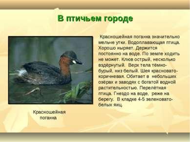 В птичьем городе Красношейная поганка Красношейная поганка значительно мельче...