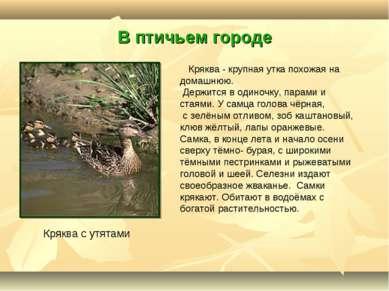 В птичьем городе Кряква с утятами Кряква - крупная утка похожая на домашнюю. ...
