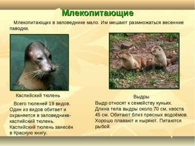 Млекопитающие Каспийский тюлень Выдры Всего тюленей 19 видов. Один из видов о...