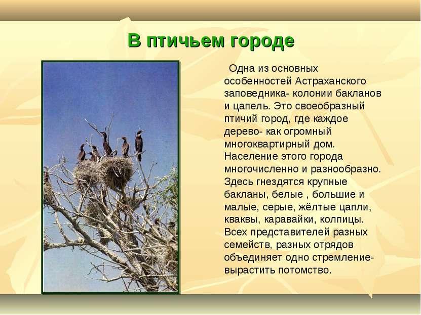 В птичьем городе Одна из основных особенностей Астраханского заповедника- кол...