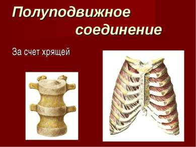 Полуподвижное соединение За счет хрящей