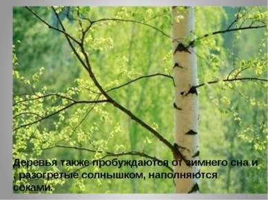 Деревья также пробуждаются от зимнего сна и , разогретые солнышком, наполняют...