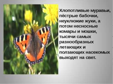 Хлопотливые муравьи, пёстрые бабочки, неуклюжие жуки, а потом несносные комар...