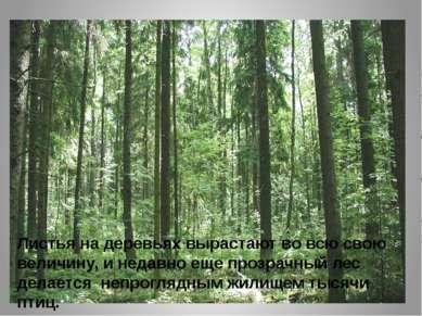 Листья на деревьях вырастают во всю свою величину, и недавно еще прозрачный л...