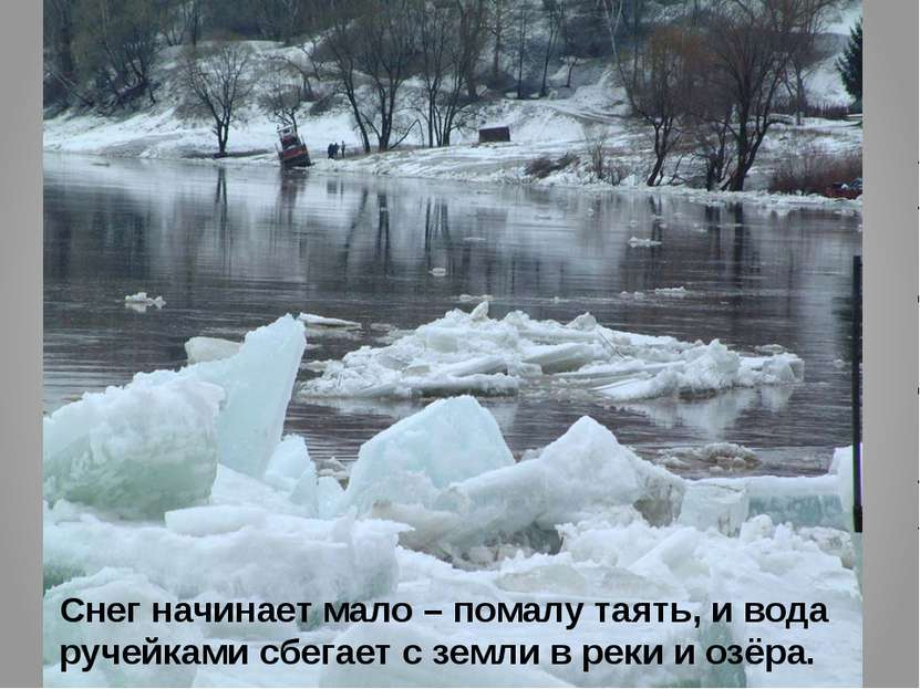 Снег начинает мало – помалу таять, и вода ручейками сбегает с земли в реки и ...
