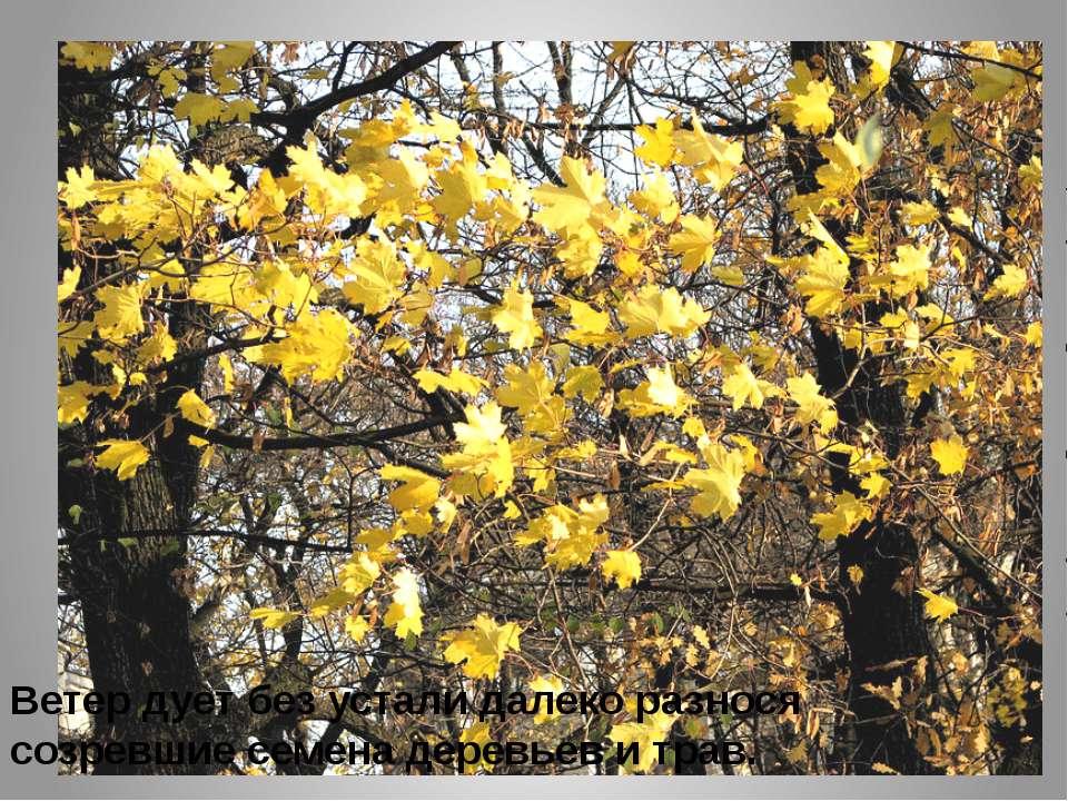Ветер дует без устали далеко разнося созревшие семена деревьев и трав.