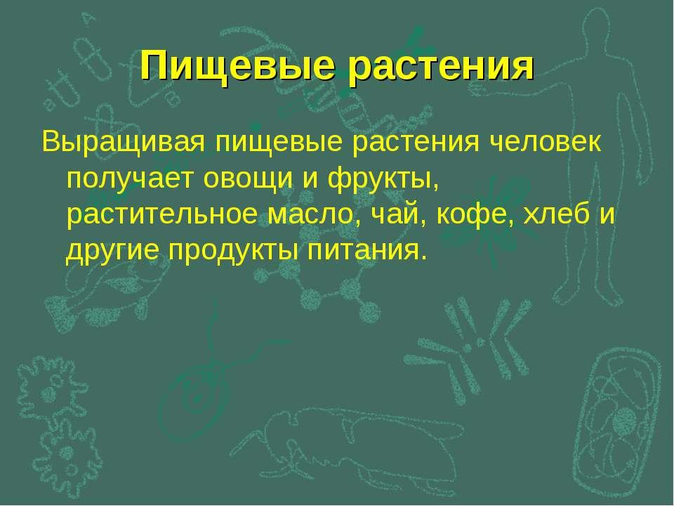 Пищевые растения Выращивая пищевые растения человек получает овощи и фрукты, ...