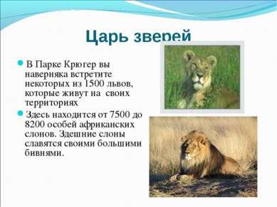 Царь зверей В Парке Крюгер вы наверняка встретите некоторых из 1500 львов, ко...