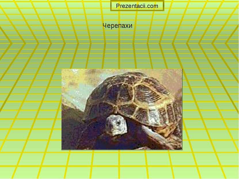 Черепахи Prezentacii.com