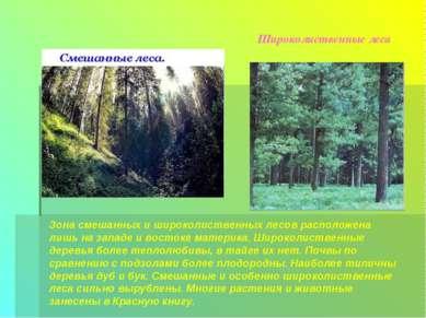 Широколиственные леса Зона смешанных и широколиственных лесов расположена лиш...