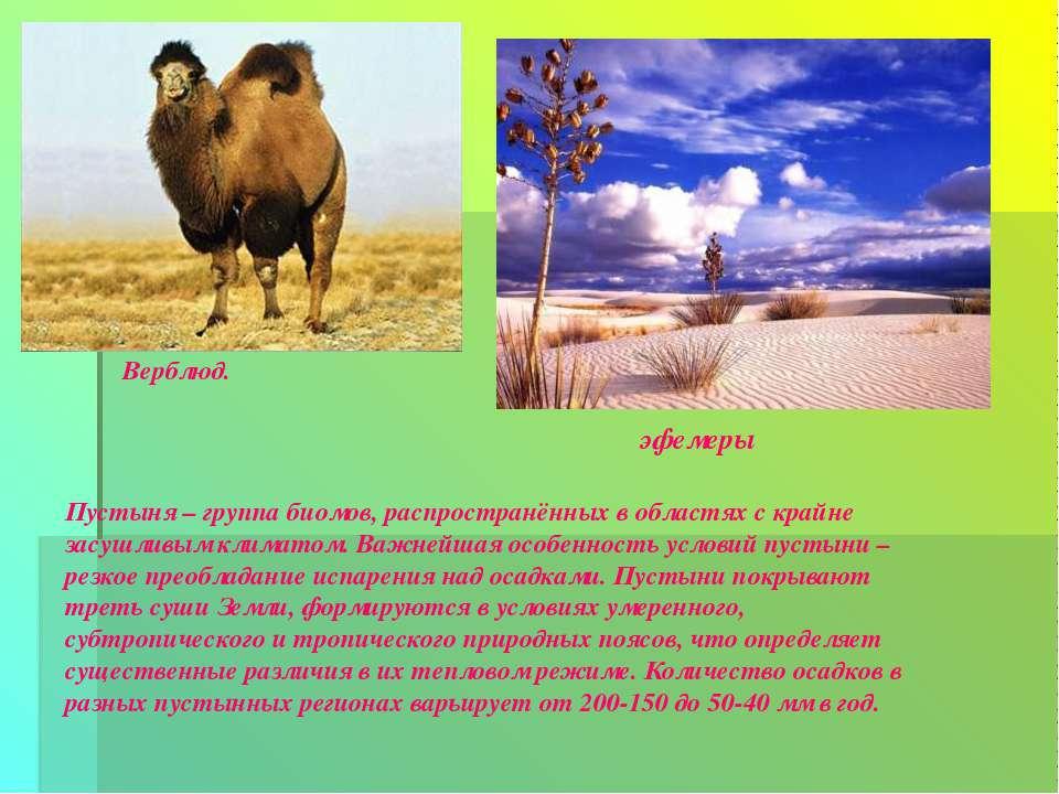 Верблюд. эфемеры Пустыня – группа биомов, распространённых в областях с крайн...