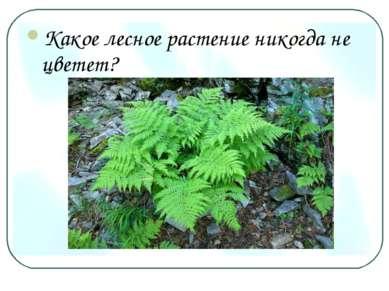 Какое лесное растение никогда не цветет?
