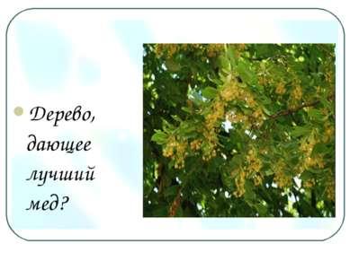 Дерево, дающее лучший мед?