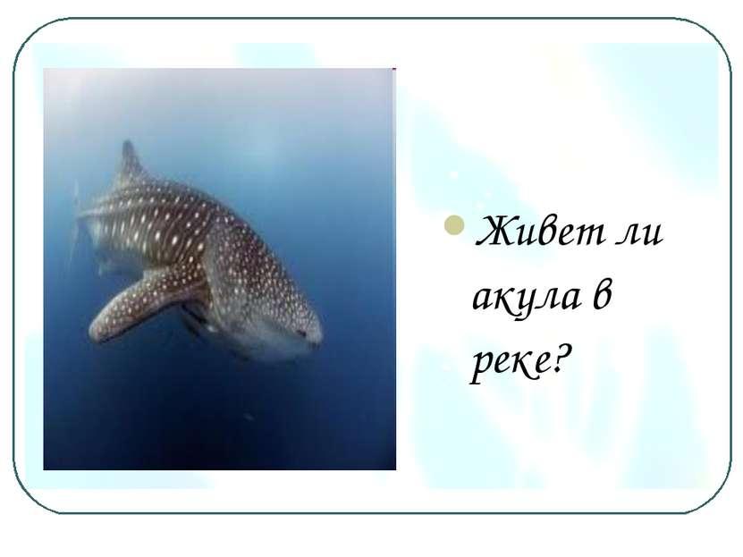 Живет ли акула в реке?