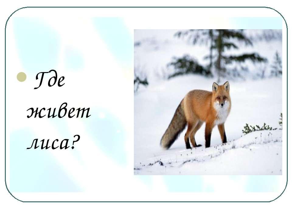Где живет лиса?