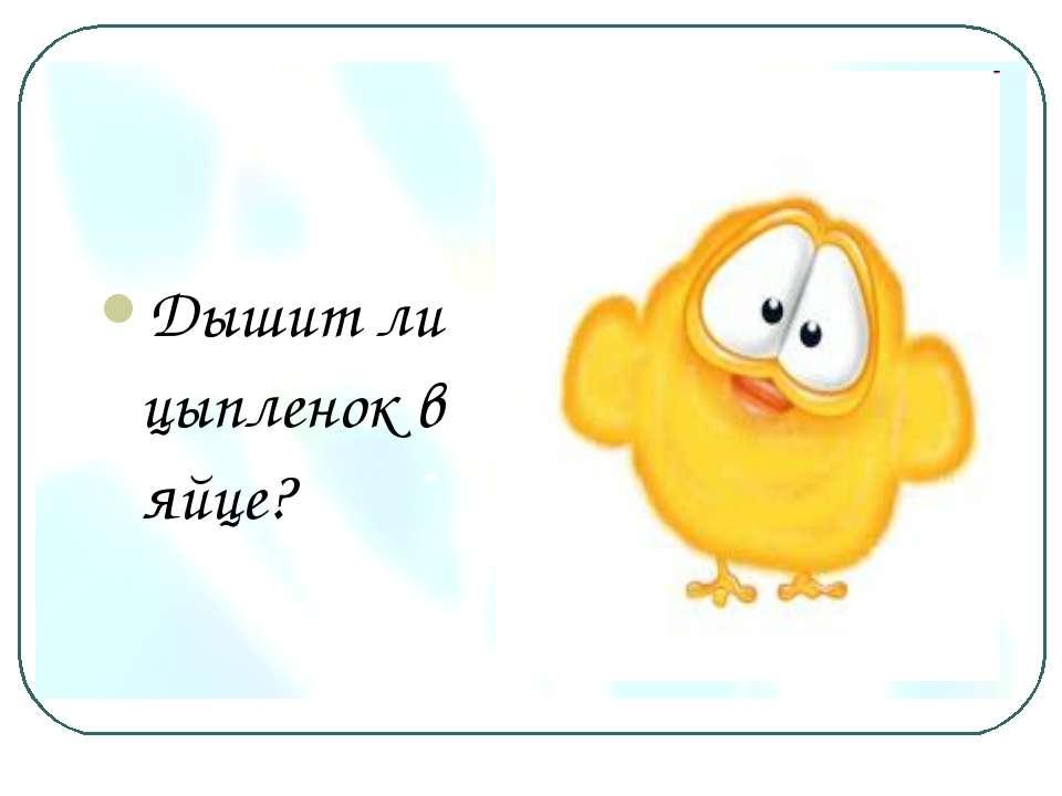 Дышит ли цыпленок в яйце?