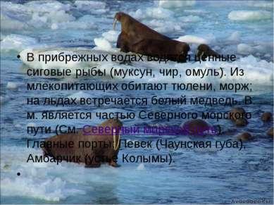 В прибрежных водах водятся ценные сиговые рыбы (муксун, чир, омуль). Из млеко...