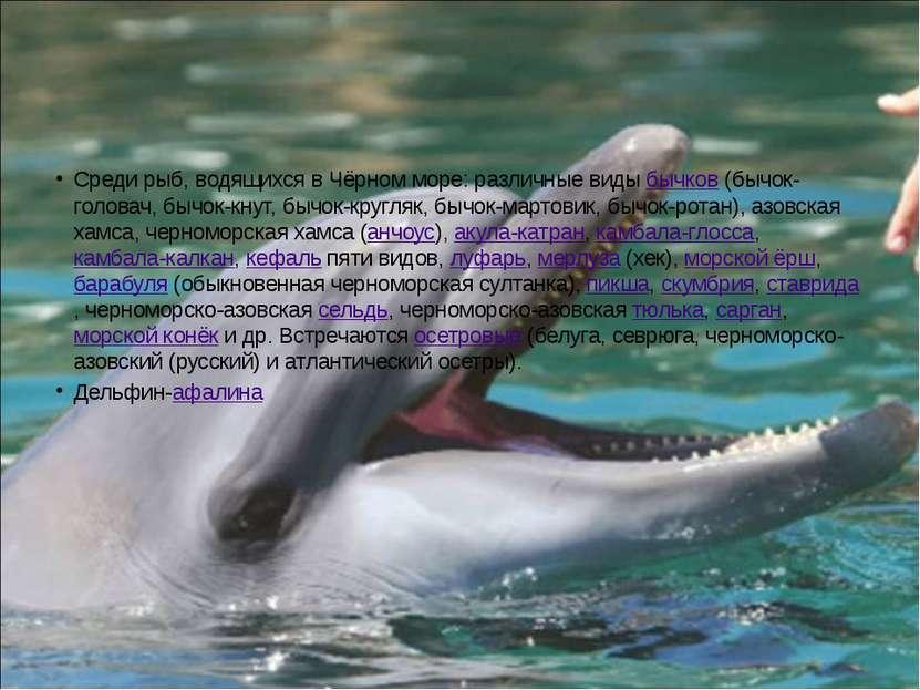 Среди рыб, водящихся в Чёрном море: различные виды бычков (бычок-головач, быч...