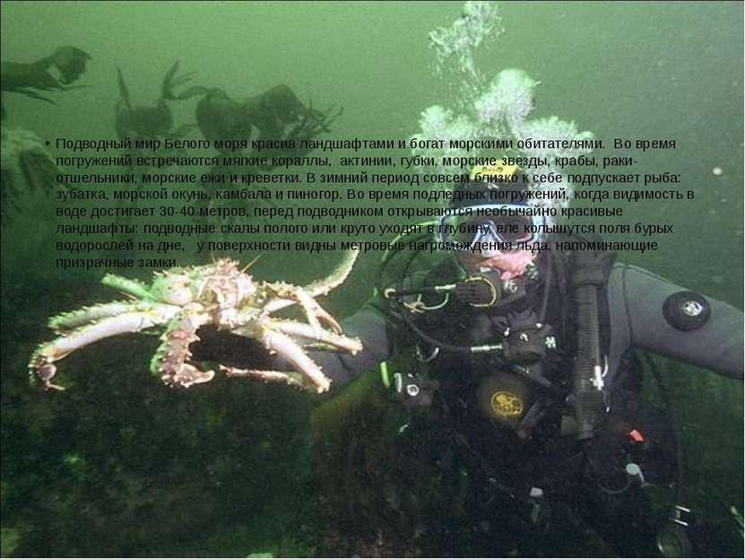 Подводный мир Белого моря красив ландшафтами и богат морскими обитателями. В...