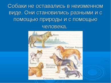 Собаки не оставались в неизменном виде. Они становились разными и с помощью п...