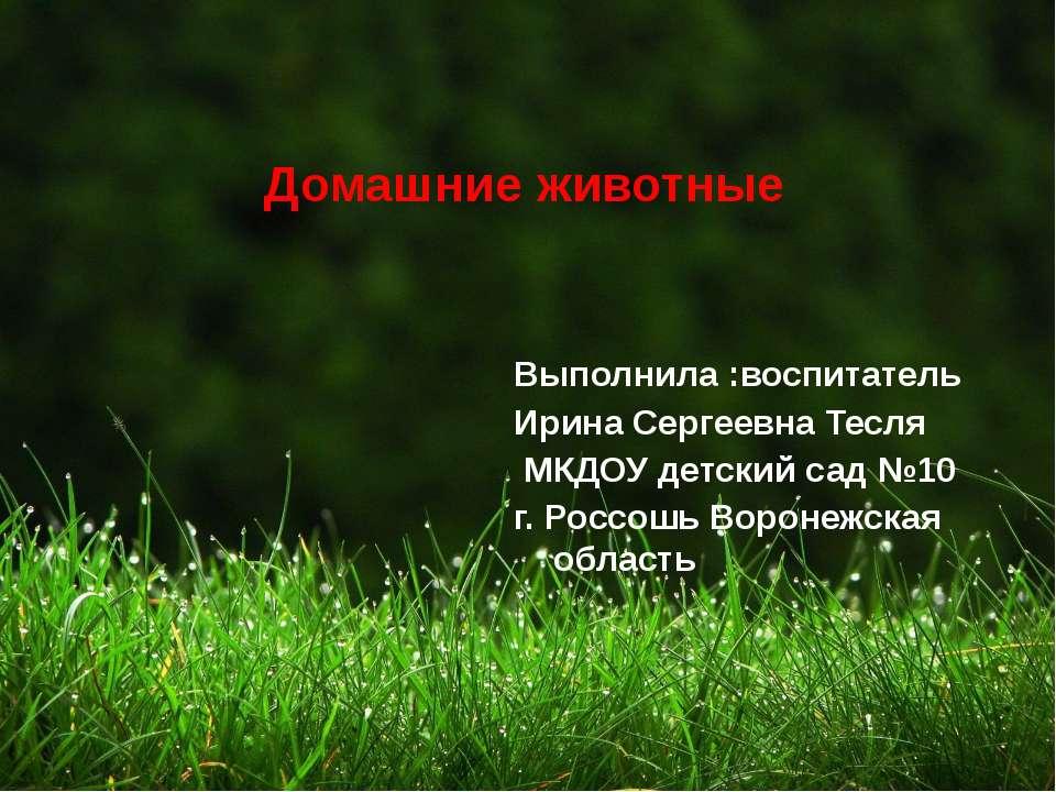 Домашние животные Выполнила :воспитатель Ирина Сергеевна Тесля МКДОУ детский ...