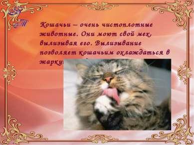Кошачьи – очень чистоплотные животные. Они моют свой мех, вылизывая его. Выли...