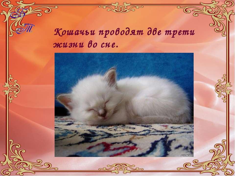 Кошачьи проводят две трети жизни во сне.